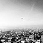 A swallow flies over Barcelona City